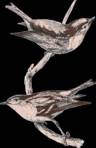 Bird Pair